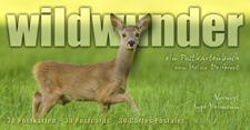 wildwunder